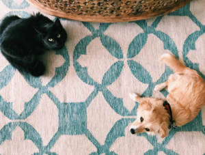 Two pets getting used to living together
