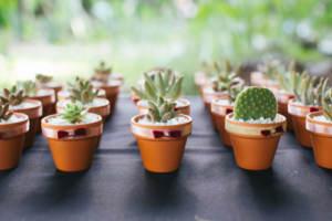A budget-conscious floral arrangement consisting of potted succulents